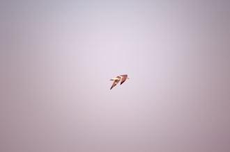 dsc_bird